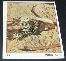 N°75 PORC EPIC PANINI 1970 TOUS LES ANIMAUX EDITIONS DE LA TOUR