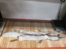 Blue Fox Skin Taxidermy, Non-Split with Paws
