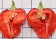 25 Sweet Habanero,Pepper Seeds, (C. chinense) looks,smells like Habanero,NO HEAT