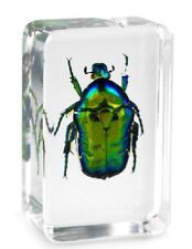 Real Green Chafer Beetle Insect Paperweight Specimen Taxidermy