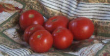 Heirloom Open-Pollinated Manitoba Tomato-25 seeds