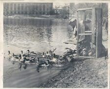 1949 Minneapolis MN Loring Park Board Decides the Duck can go out Press Photo