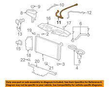 GM OEM Radiator-Outlet Lower Hose 15834772