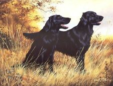 Flatcoated Retriever Print by Robert J. May