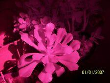 Kodak Z712 7MP 650NM 12X Zoom Infrared Full Spectrum NIR Ghost Hunting Camera