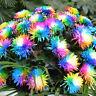 100pcs Regenbogen-Chrysantheme-Blumen-Samen ungewöhnliche Colorful Garden b D5E6