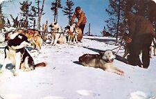 Hudson Bay Company Canada~Dog Sleds Huskies Postcard 1961