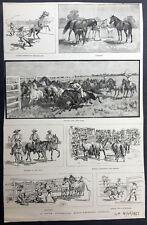 1885 Iln Antique Print Seven Views of Horse Breeding in South Australia