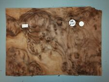 CONSECUTIVE SHEETS OF AMERICAN BURR WALNUT VENEER 25 X 37 cm AM #261 MARQUETRY