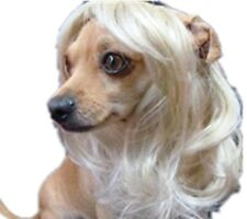 Cute Dog Costumes Colorfull Synthetic Hair Pet Wig Lovely Pet Dog Cat Wig
