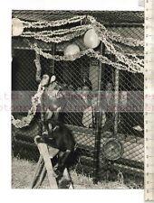 Original Press Photo: Fifi & Jane Chimps Decorating Cage in London Zoo