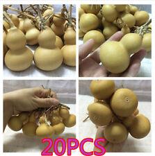 20pcs Natural Gourds Small Calabash Gourd Plant Little Gourd DIY Mascot