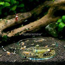 Aquarium Crystal Clear Glass Red Shrimp Snails Feeding Dish Food Bowl