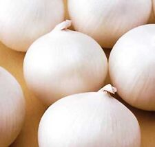 WHITE ONION - ALIBABA - SPRING SOWING - Allium Cepa - 1200  SEEDS 5g./0.18oz