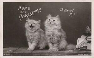 CHRISTMAS - Two Cats Home For Christmas To Greet You - 1907