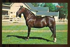 MORGAN HORSE Beautiful Black Horse Vintage 1966 Unused Chrome Postcard