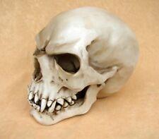 Replik Orc Schädel Markus Mayer Totenkopf Skull Gothic NEU TOP