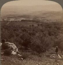 Palestine. Plain of Dothan, Where Joseph Was Sold to the Ishmaelites. Stereoview