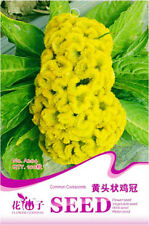 Original Package 100 Common Cockscomb Seeds Yellow Celosia Cristata Seed A204