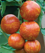 Red Zebra Tomato Seeds! OVER 200 KINDS OF TOMATOES IN OUR STORE! COMB S/H