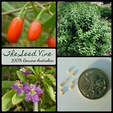 30+ GOJI BERRY SEEDS (Lycium chinense) Edible Berry Medicinal Super Food Fruit