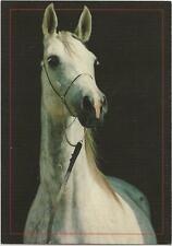 Horse Postcard -Beautiful Grey - Arabian?