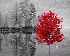 Red Gray Black Home Decor Wall Art Photo Print Tree Landscape Lake Picture & Mat