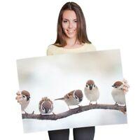 A1 - Little Birds Sparrows Winter Bird Poster 60X90cm180gsm Print #8142