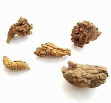 1 Small Fossilized  DINOSAUR COPROLITE, Dino Poop, little turd nugget (1 piece)