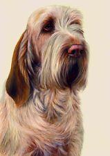Nigel Hemming JUST DOGS - ORANGE ROAN ITALIAN SPINONE Spinoni Gun Dogs Print Art