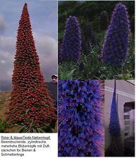 Für Blumenstäuße & Blumentopf : Blauer & roter Riesen-Natternkopf // Samen ....