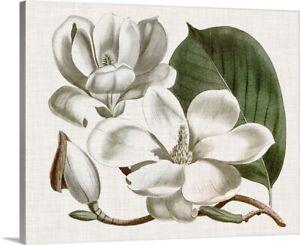 Curtis Magnolia I Canvas Art Print