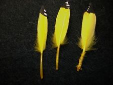 Yellow Flicker Feathers, Eagle, Hawk, Owl Turkey, Feather 24 pcs. hand painted