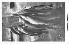 Glenwood Minnesota Fish Catch On Tree Antique Postcard K102593