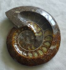 3602g  Natural Poilished Jade Pattern Ammonite Fossil Ashtray Container 1#