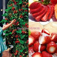 100 PCS Seeds Japanese Hokowase Strawberry Indoor Outdoor Plant Garden Bonsai S