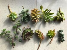 SUCCULENTS 10 x succulent cuttings starter pack, same as main picture