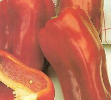 PIMIENTO INFANTES  Red pepper nocera 100 Semillas seed