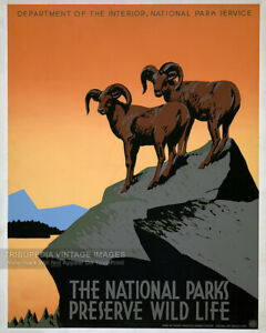 Vintage 1930s National Parks Preserve Wild Life WPA Travel Poster Fine Art Print