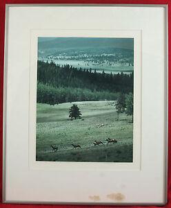 1975 Elk Above Castilla Meadow Vermejo Park Robert Haslanger Signed Print NM CO