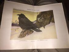 1925 BIRDS OF N.Y. NORTHERN RAVEN & CANADA JAY PRINT,PLATE 10, FUERTES