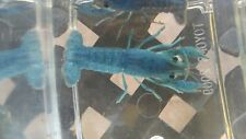 "Female Electric Blue Crayfish 2-3"" live fish crawfish crawdad invertebrate"