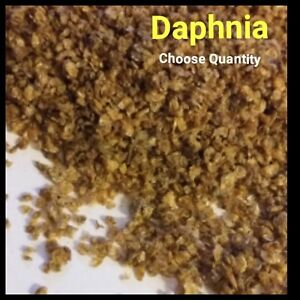 Freeze Dried Daphnia Cichlid Discus Tropical Fish Food Freeze Dried Fish Food