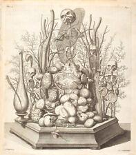 Cabinet de curiosité planche affiche A3 anatomie humaine trilogie de squelette