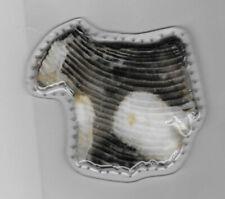 Pine Needle Basket Bottom - Brown/Cream Petrified Wood Rock Slice - Handcrafted