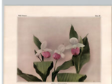 1934 Wildflower Book Plate Showy Lady's Slipper  Small White Lady's Slipper