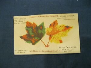 Victorian Trade Card Brown the Druggist  Poughkeepsie NY Ponds Extract Leaves 4A
