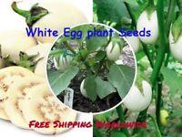 White Eggplant Seeds Solanum Melongena Delicious Vegetable Plant 100 Seeds