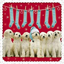 Golden Retriever Christmas Cards Stocking Time 10 Pack Glitter Spot Xmas Cards