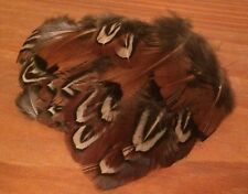 100 COCK PHEASANT FEATHERS-FLY TYING MILLINERY,HAIR,JEWELLERY,CRAFT.